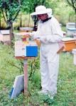 Pčelarski kombinezon - beli keper (100% pamuk), svih veličinama